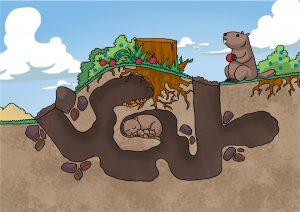 موش خرماها برای ساختن لانه، در زمین نقب میزنند