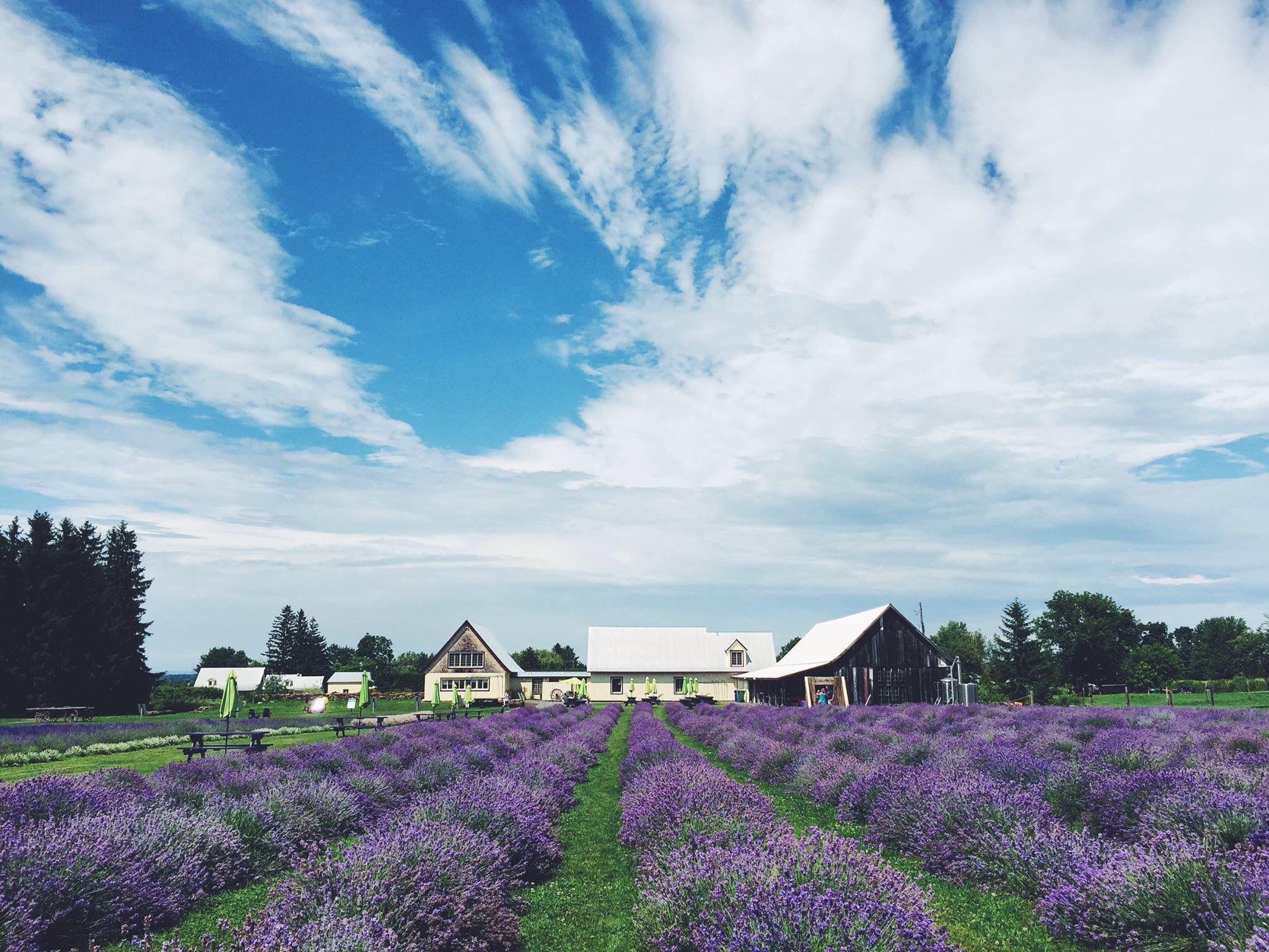 مزرعه La Maison Lavande در فاصله نزدیکی به مونترال قرار دارد
