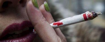 مهلت صاحبخانههای کبکی برای ممنوع کردن ماریجوانا در خانهّایشان به زودی به اتمام میرسد / CHRISTOPHER KATSAROV / THE CANADIAN